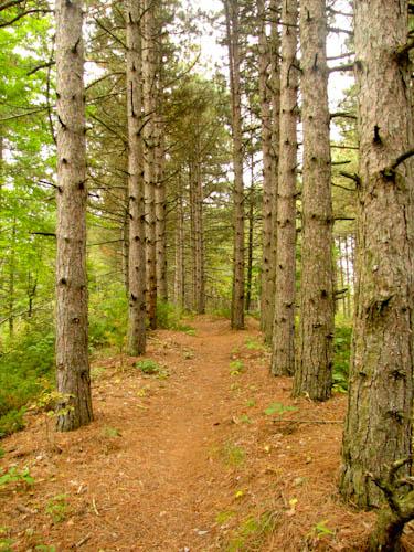 fir-path