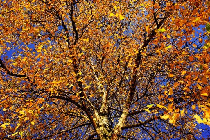 tree-1862633_1280