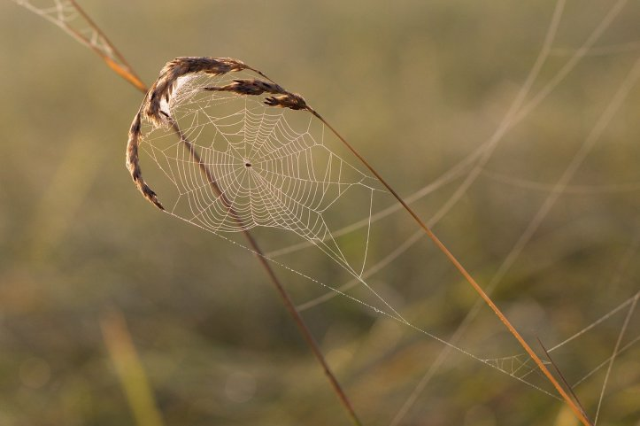 cobweb-1576299_1280